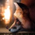 Profile picture of Fae Fox